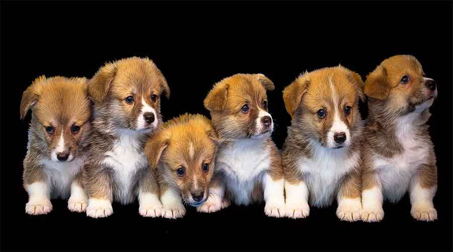 cute puppies vaccinations