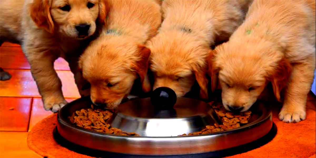 feed your puppy